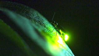 in-a-flash-firefly-communication-1024x577-1.jpg
